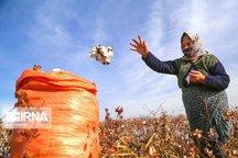 کیسههای پلاستیکی، بلای جان طلای سفید خراسان شمالی