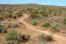 تصرف اراضی ملی بیشترین تخلف در حوزه منابع طبیعی شاهرود است