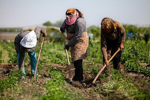ظرفیتهای روستایی از مبانی تحقق اقتصاد مقاومتی است
