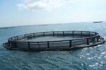 برداشت 700 تن ماهی پرورش در قفس از دریاچه سد کارون 4