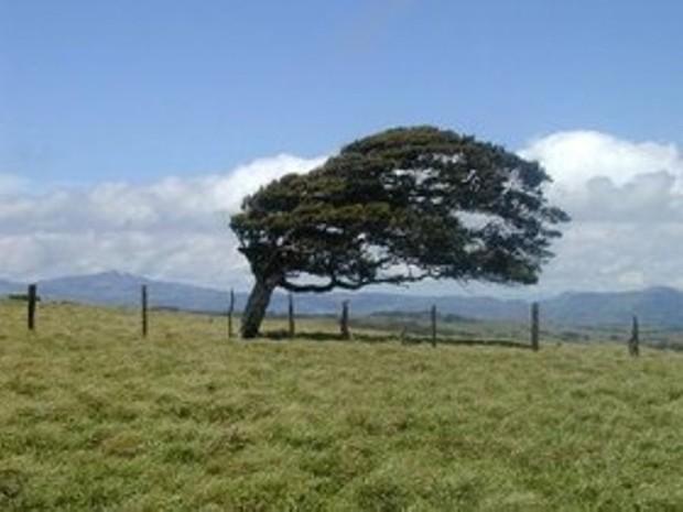 وزش باد، پدیده غالب هوای روز طبیعت در خراسان شمالی است