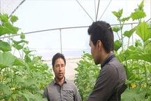 نظام مهندسی کشاورزی خراسان شمالی 964 شغل ایجاد کرد