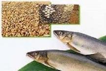 صادرات خوراک آبزیان چهارمحال وبختیاری به 6 کشورثبت سفارش شد
