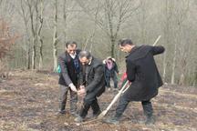 بیش از یکهزار اصله درخت در سیاهکل کاشته شد