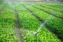 9 هزار هکتار زمین کشاورزی در ایرانشهر به آبیاری نوین مجهز شد