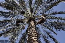 جشن «هامین» در سیب و سوران برگزار میشود