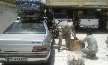 ٢٨قطعه کبک و 2قطعه عروس هلندی قاچاق در ایرانشهر کشف شد