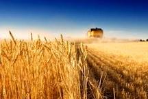 69میلیون دلار ؛ سهم آذربایجان شرقی از صادرات محصولات کشاورزی