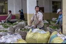 برگ سبز چای، بالاتر از نرخ تضمینی خریداری می شود