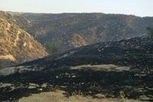 آتش لنه خاموش شد  مردم چرداول با دست خالی  آتش را مهار کردند