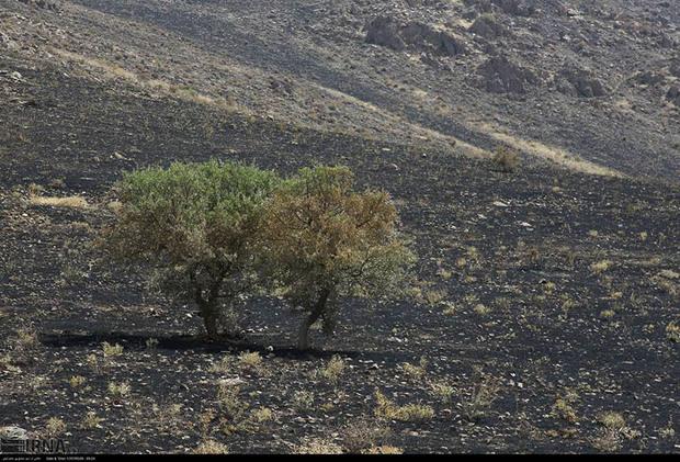 آتش سوزی مراتع و جنگل های کردستان 23 درصد کاهش یافت