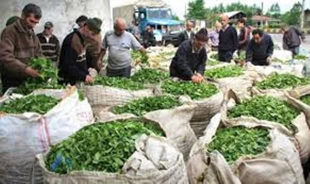 صرف یک فنجان چای با هیات دولت در لاهیجان