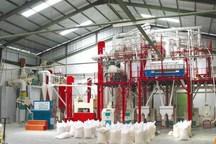 نخستین کارخانه آرد بوشهر به چرخه تولید بازگشت