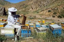 تولید عسل در میاندوآب ۴۱ درصد افزایش یافت