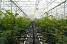 2 مجتمع گلخانه ای به ظرفیت 150هکتار در شیروان اجرا می شود