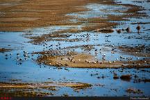 آبگیری ۵ درصدی تالاب میقان  آغاز مهاجرت پرندگان با شروع بارندگیها