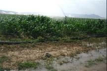 کشت محصولات آبدوست در کوهدشت ممنوع شد