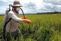 مبارزه با علف های هرز مزارع گندم در اردبیل آغاز شد