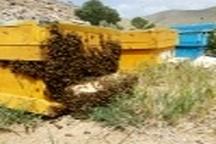 کوچ زنبورهای عسل از دشتهای خوزستان
