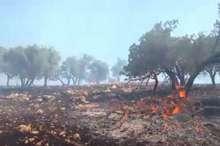 مهار حریق در کانون های اصلی آتش در جنگل های اندیمشک