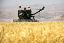36 هزار تن گندم در کهگیلویه و بویراحمد برداشت شد