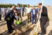کاشت ۳۲ هزار مترمربع فضای سبز در منطقه ویژه اقتصادی پتروشیمی