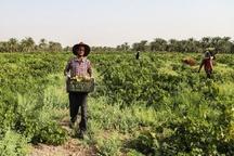 105 میلیارد ریال تسهیلات در بخش کشاورزی اردبیل پرداخت شد