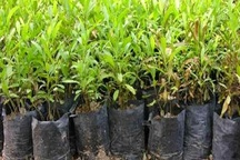 برگزاری مراسم درختکاری و اهدای نهال رایگان به مناسبت روز درختکاری