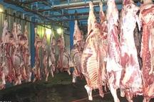 رشد 10 درصدی تولید گوشت قرمز در نقده