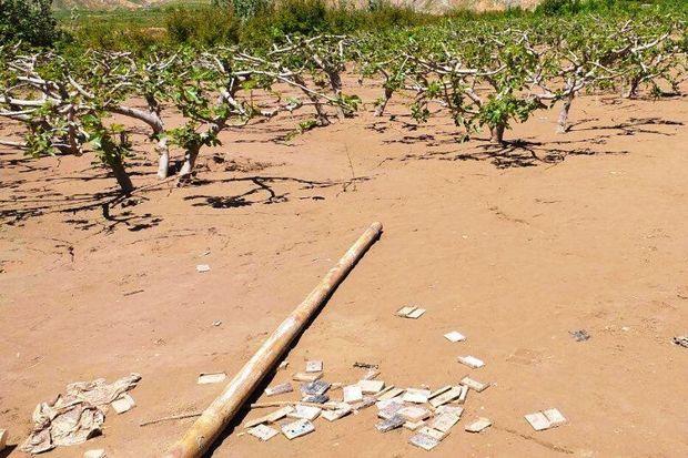 ۱۷ هزار پرونده برای کشاورزان سیل زده ایلام تشکیل شد