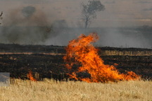 آتش زدن کاه و کلش خسارت جبران ناپذیری به خاک کشاورزی می زند