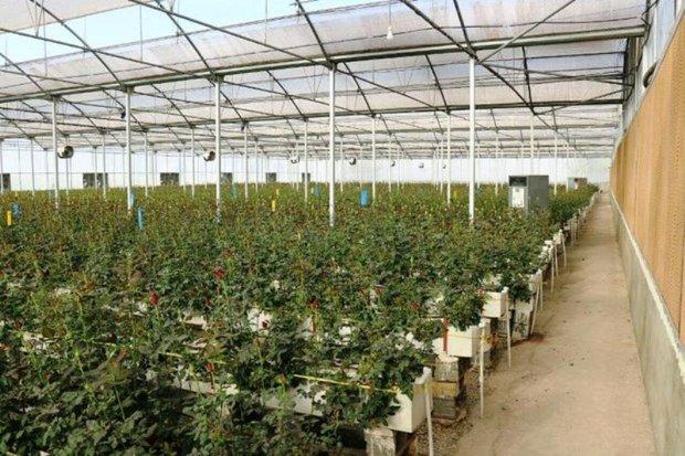 هفت طرح کشاورزی در دزفول بهره برداری شد