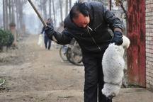 رفتار خشونت آمیز با حیوانات به دور از انسانیت و جرم است