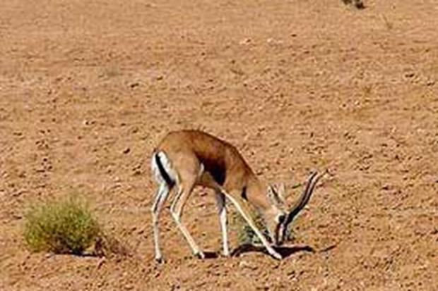 بیماری در حیات وحش استان مرکزی مشاهده نشده است