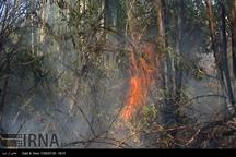 14 تیم واکنش سریع مهار آتش در ایلام ساماندهی شده اند