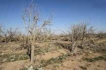 میانگین بارش ها در خراسان شمالی 38درصد کاهش یافت