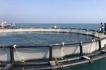 10درصد ظرفیت تولید ماهی در قفس چهارمحال و بختیاری فعال است
