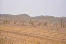 خشکسالی 625 میلیارد تومان زیان به یزد وارد کرد