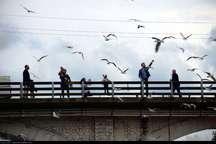 طبیعت گردی در مازندران چتر آرامش برای پرندگان مهاجر