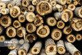 کشف بیش از یک تن چوب جنگلی قاچاق در طارم