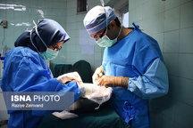 اهدای عضو بیمار ۴۳ ساله مرگ مغزی در بندرعباس  به بیش از ۱۰۰ عضو برای پیوند در هرمزگان نیازمندیم