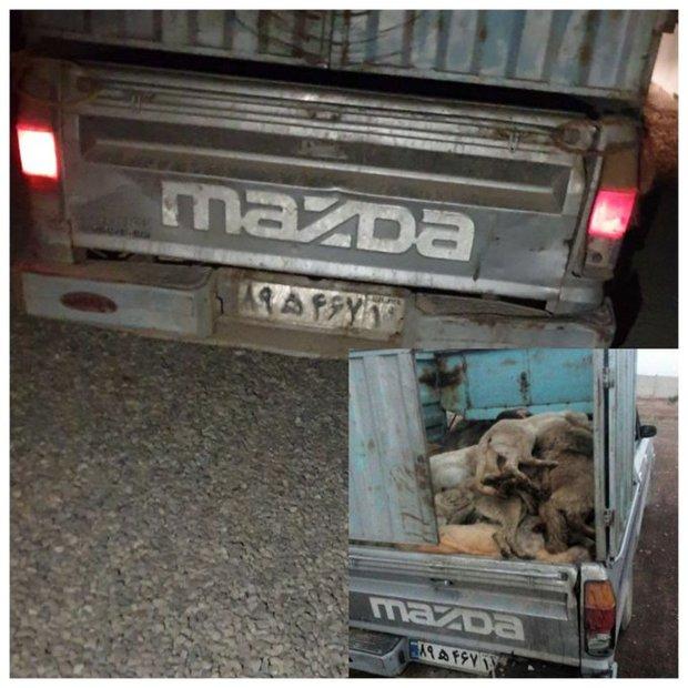 تازگی سگکشی در تهران تایید شد + عکس