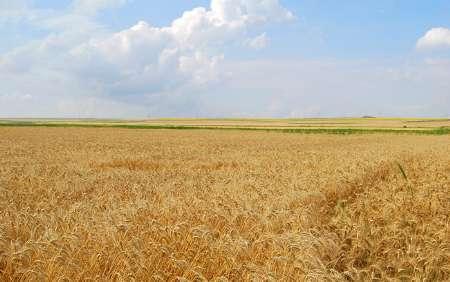 190 میلیارد ریال غرامت بیمهای کشاورزان کهگیلویه و بویراحمد پرداخت شد