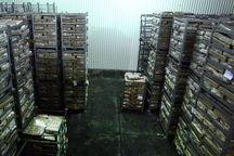 محصولات کشاورزی دارای اولویت صادرات شناسایی میشوند