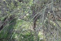 680 هکتار جنگل در کهگیلویه و بویراحمد ایجاد شد