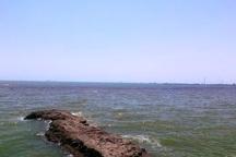 توده های کِشَند قرمز در ساحل بندرعباس مشاهده شده است