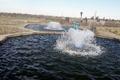 24 هزار بچه ماهی گرمابی در استخرهای پرورش زابل رها سازی شد