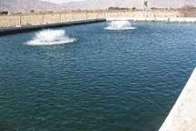 رهاسازی 10هزار قطعه ماهی در استخرهای آب کشاورزی ابرکوه