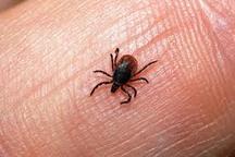 مشاهده بیماری تب کریمه کنگو در اردبیل