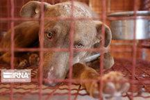 بررسی مرگ پیرزن آستانهای بهدلیل حمله سگ توسط دامپزشکی